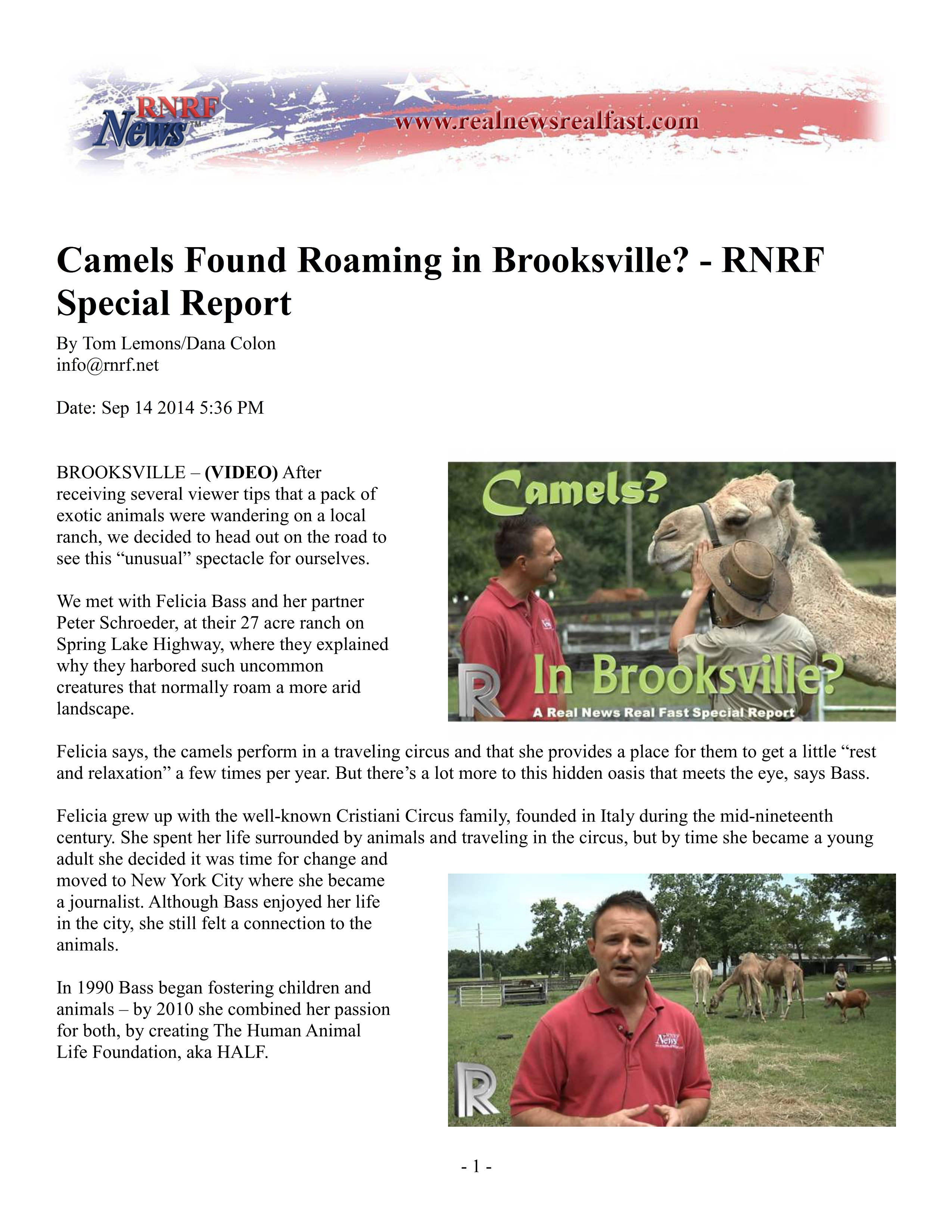 Camels Found Roaming in Brooksville - RNRF Special Report 09-14-2014 Pg1